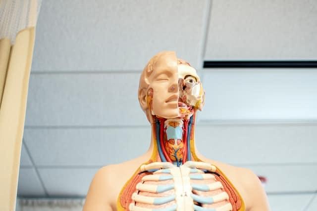 בובה של בן אדם פצוע כהמחשה לרשלנות רפואית